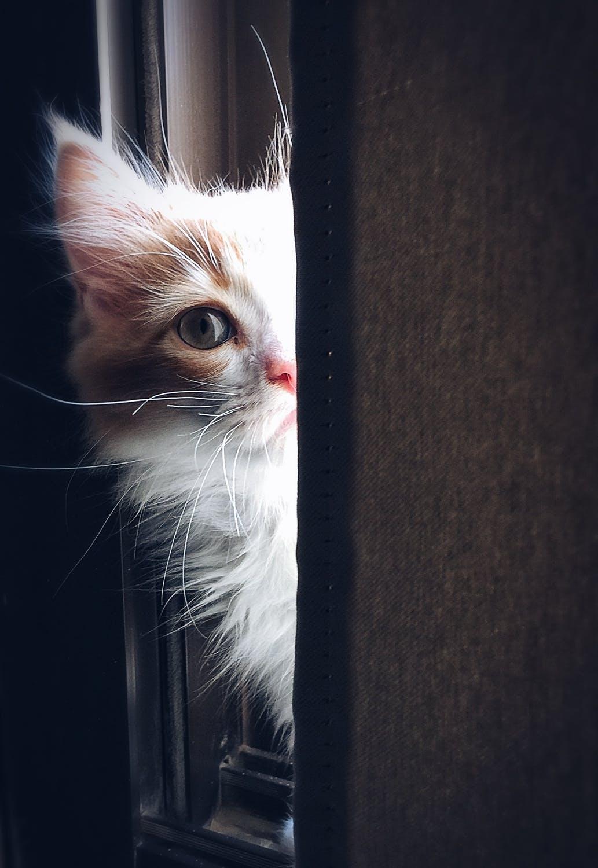 kočka u okna